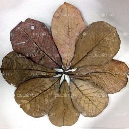DECOTOP Catappa M – Листья индийского миндаля, 20-25 см, 10 шт.