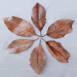 DECOTOP Magnolia XS – Листья магнолии, 10-15 см, 10 шт.