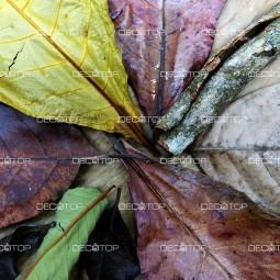 DECOTOP Ceylon 2 – Набор листьев из Шри-Ланки 10-25 см, 10 шт.