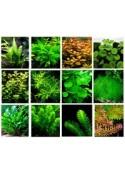 Наборы аквариумных растений
