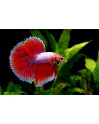 Купить Аквариумные рыбки в интернет зоомагазине guppi.ru