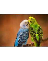 Купить Птицу в интернет зоомагазине guppi.ru